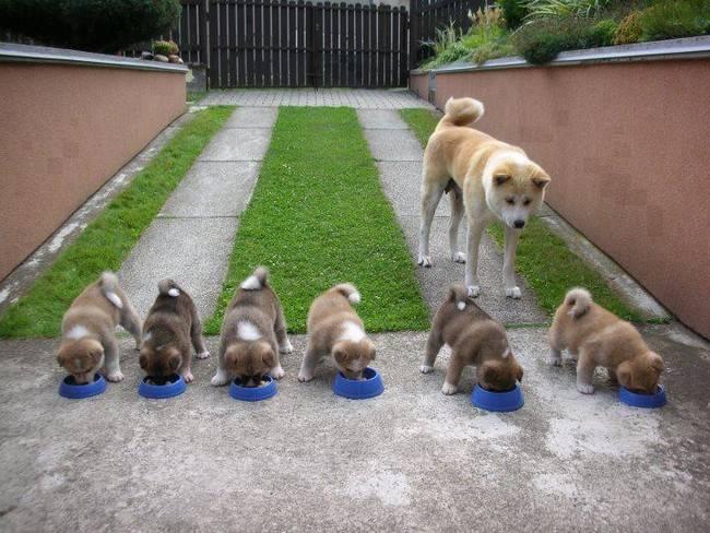 cadelas-com-seus-filhotes-6