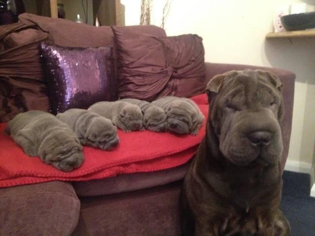 cadelas-com-seus-filhotes-7