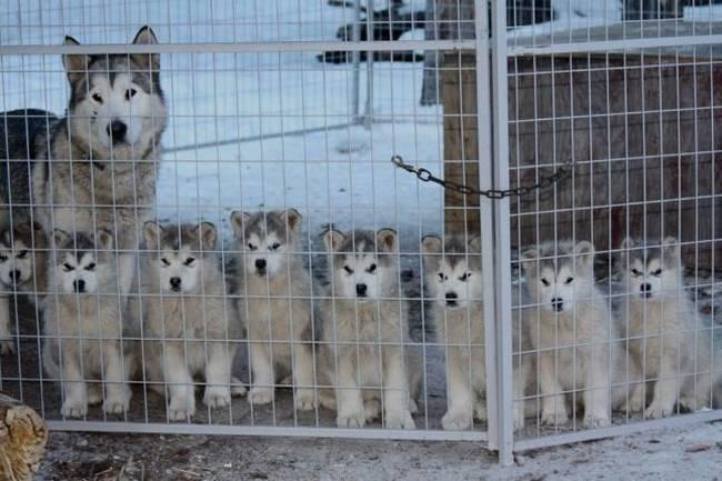 cadelas-com-seus-filhotes-9