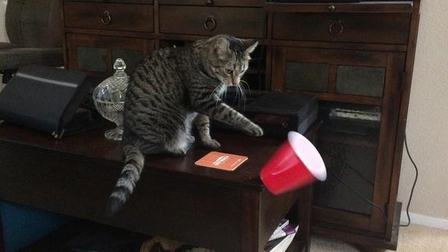 coisas-donos-gatos-entendem-1