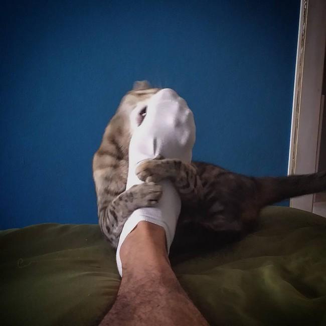 coisas-donos-gatos-entendem-11