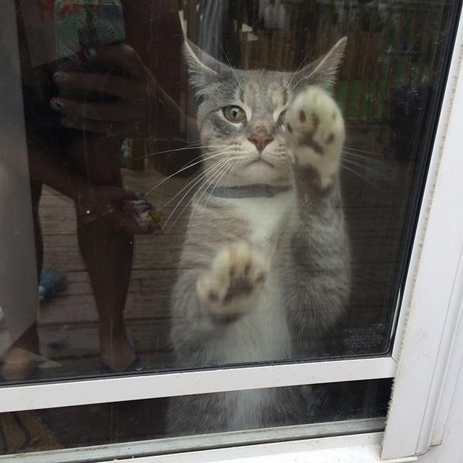 coisas-donos-gatos-entendem-14