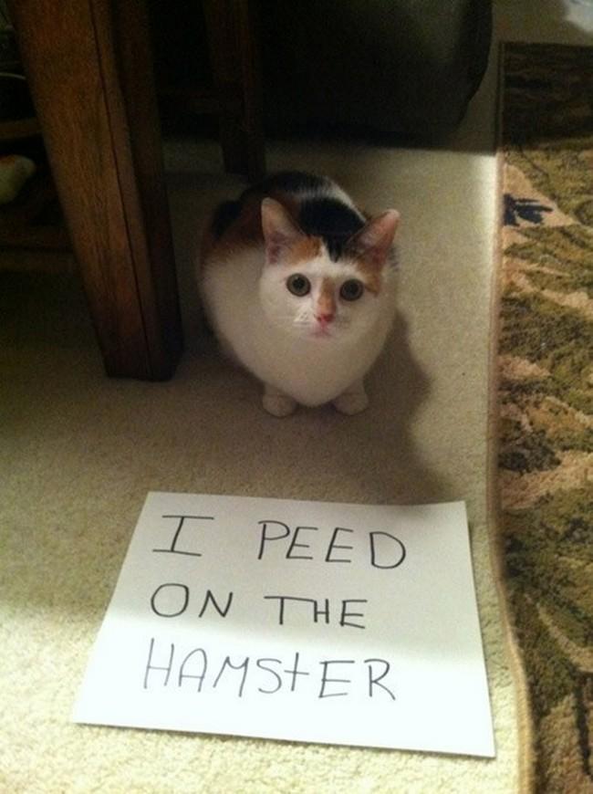 coisas-donos-gatos-entendem-19