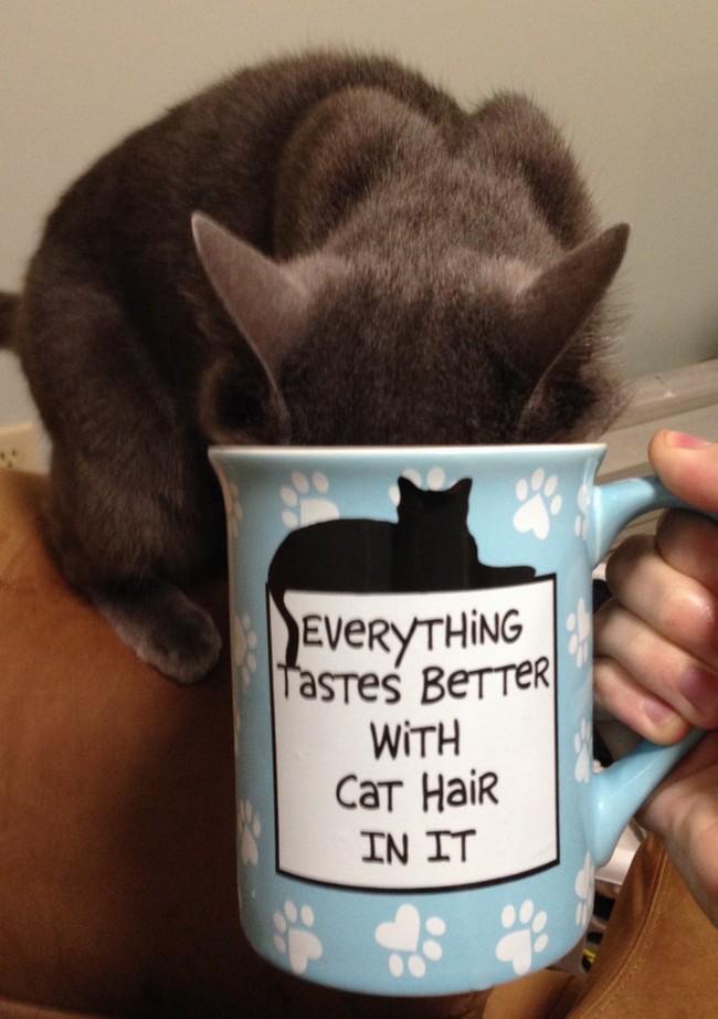 coisas-donos-gatos-entendem-7