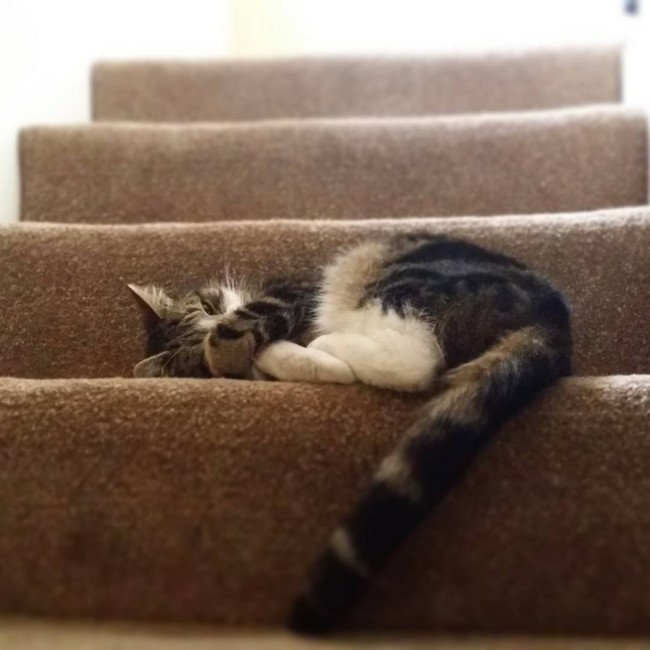 coisas-donos-gatos-entendem-9