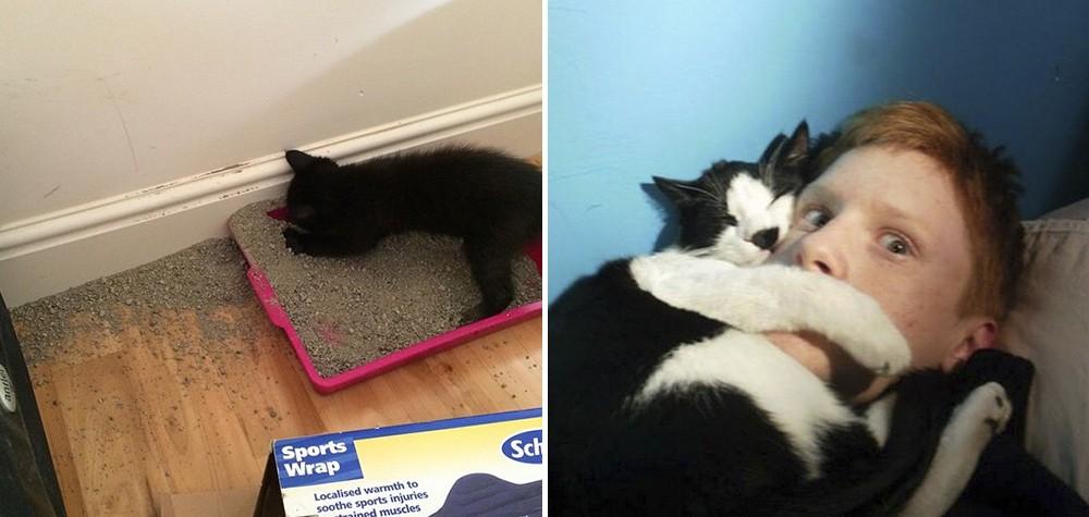 21 Coisas que os donos de gatos irão entender – com certeza!