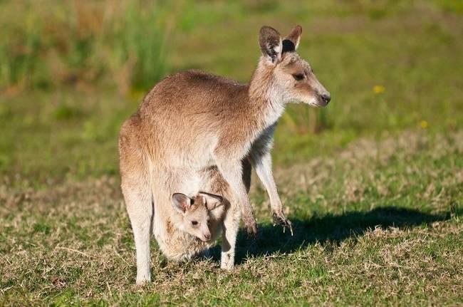 fatos-curiosos-sobre-a-austrália-11
