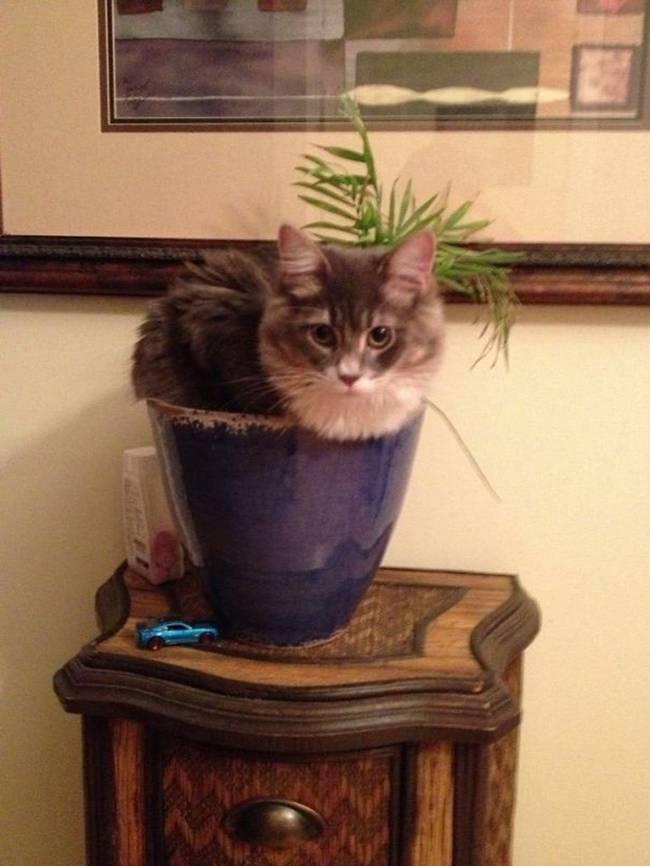 gatos-que-querem-ser-plantas-1