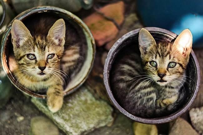 gatos-que-querem-ser-plantas-10