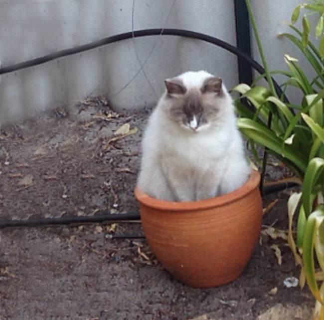 gatos-que-querem-ser-plantas-11