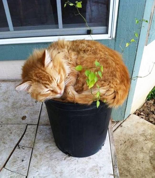 gatos-que-querem-ser-plantas-13