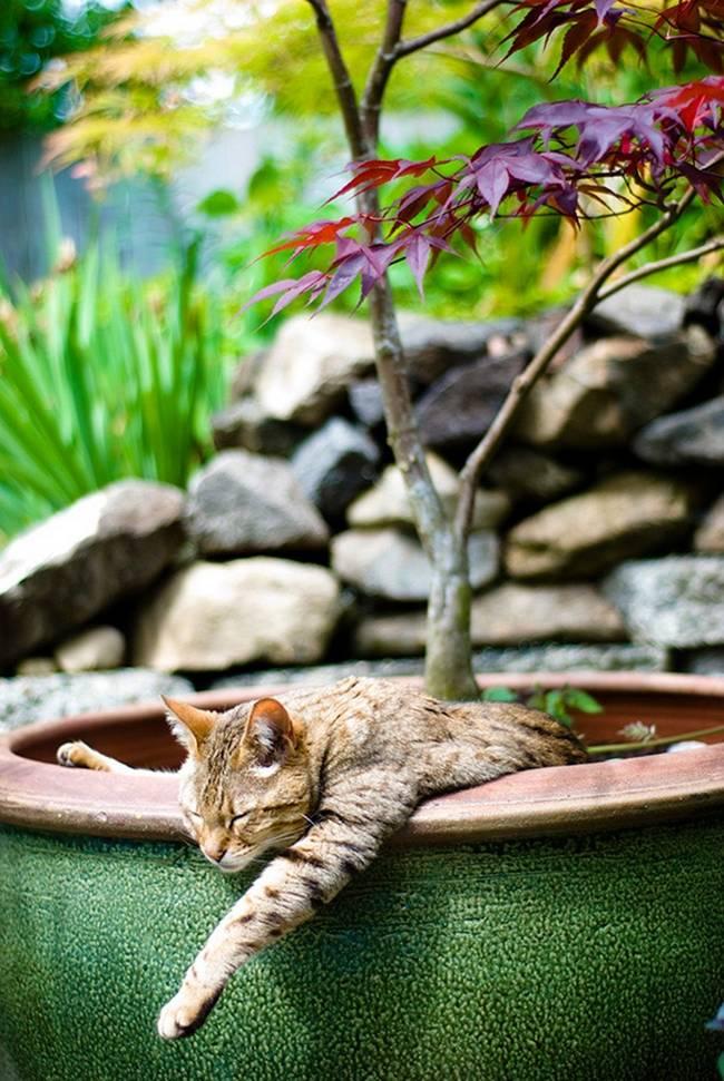 gatos-que-querem-ser-plantas-14