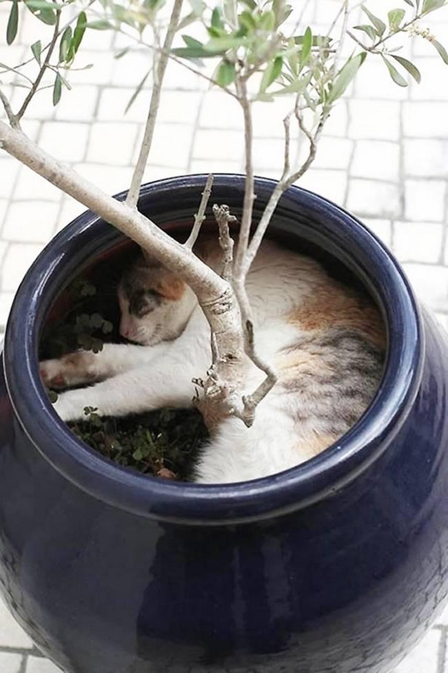 gatos-que-querem-ser-plantas-15