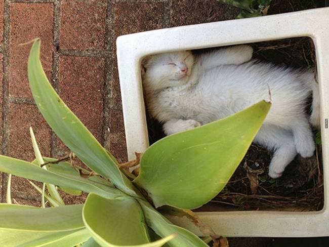 gatos-que-querem-ser-plantas-16
