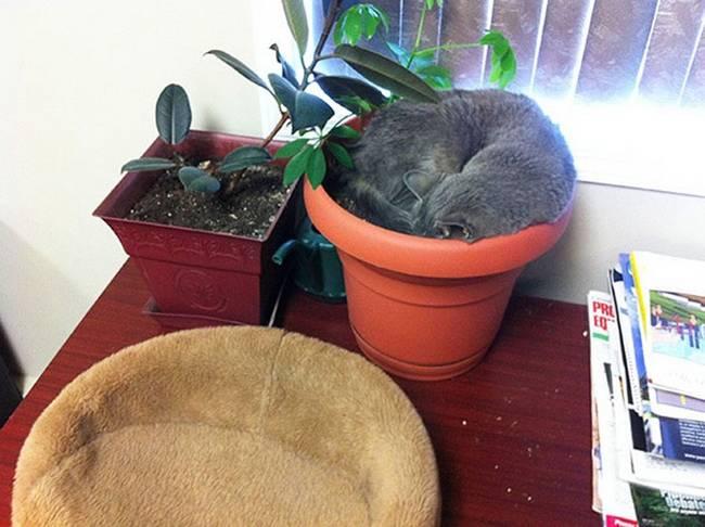 gatos-que-querem-ser-plantas-17