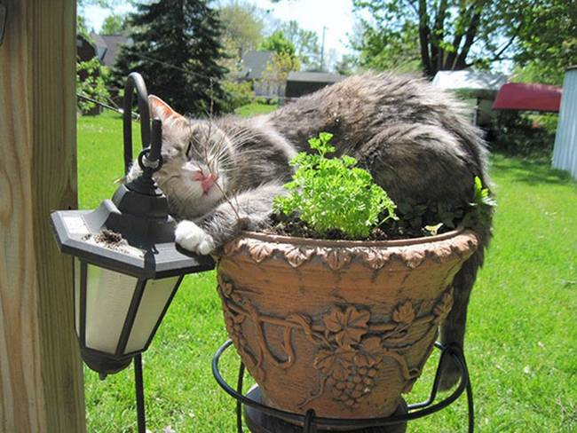 gatos-que-querem-ser-plantas-18