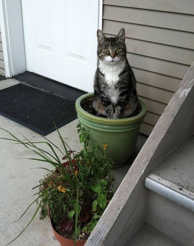 gatos-que-querem-ser-plantas-19