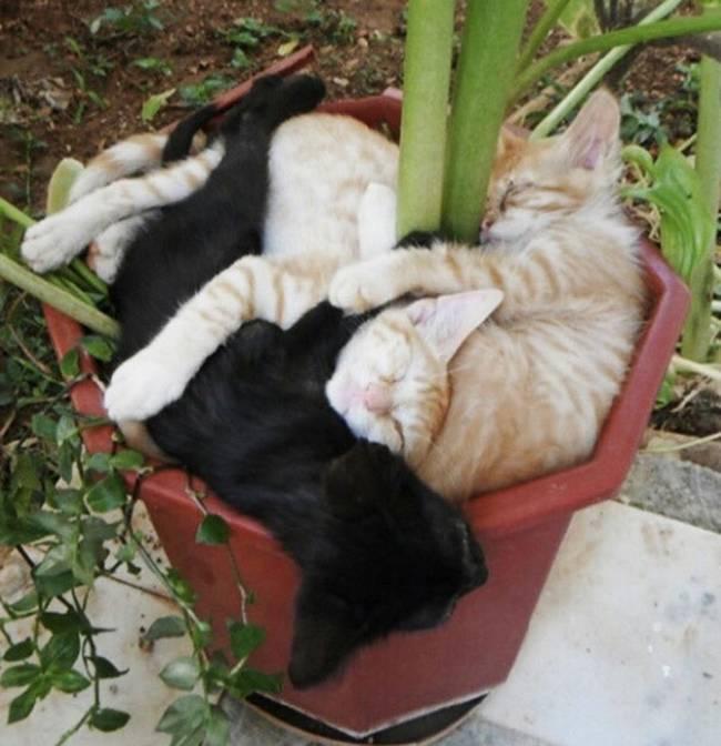 gatos-que-querem-ser-plantas-2