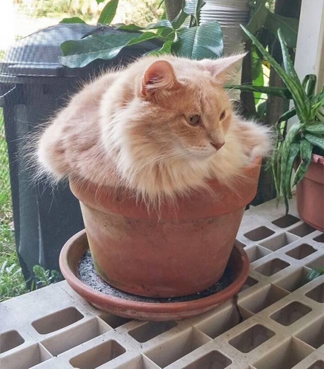 gatos-que-querem-ser-plantas-3