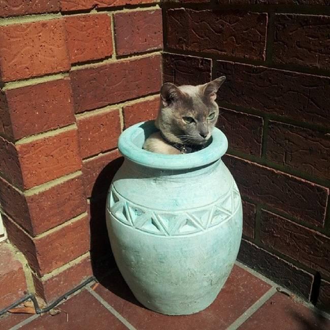 gatos-que-querem-ser-plantas-4