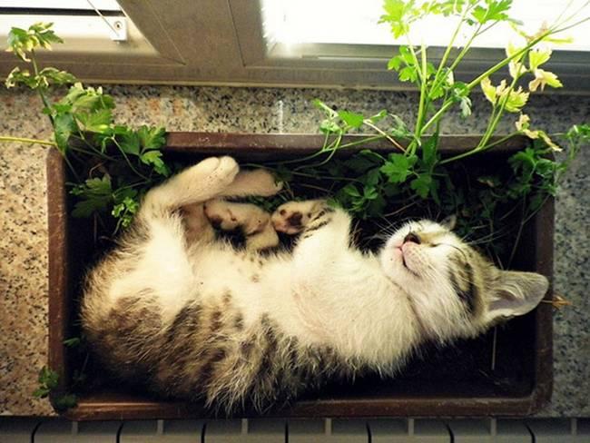 gatos-que-querem-ser-plantas-6