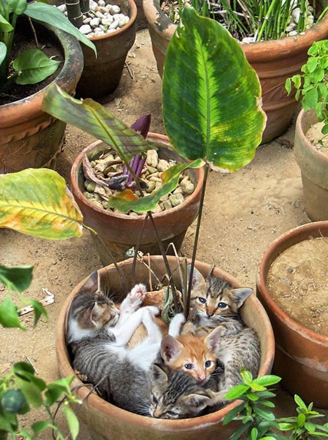 gatos-que-querem-ser-plantas-7