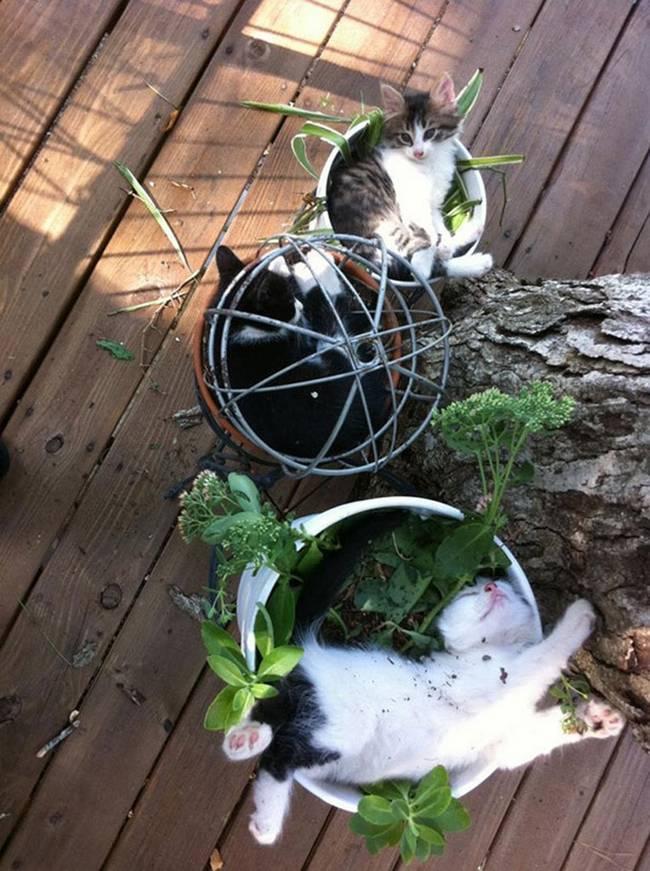 gatos-que-querem-ser-plantas-9