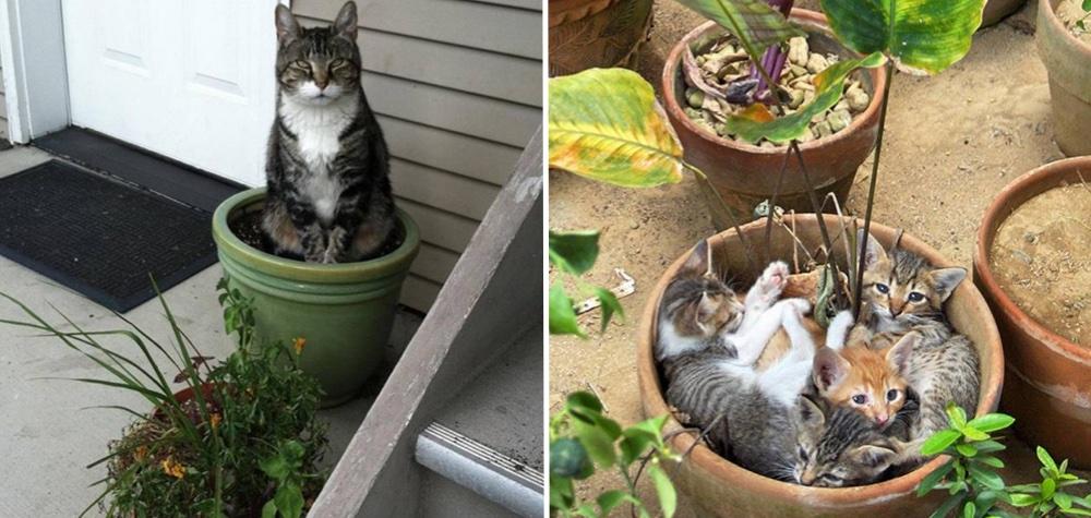 19 gatos que t m certeza de que s o plantas Plantas seguras para gatos