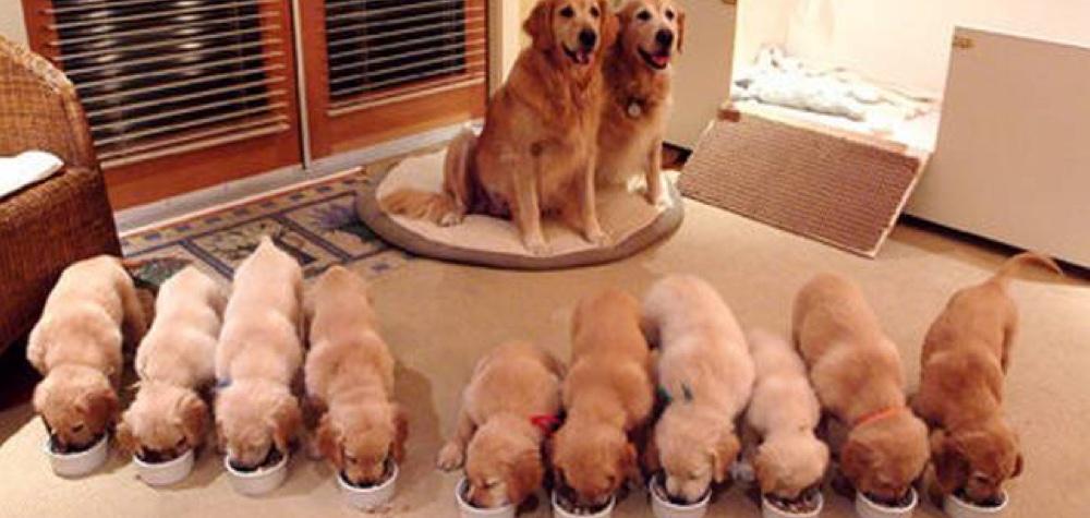 Amor materno animal | 23 Cadelinhas que são super orgulhosas dos seus filhotes