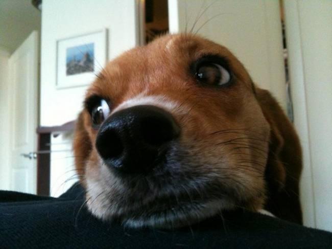 razões-para-mimar-o-seu-cachorro-2