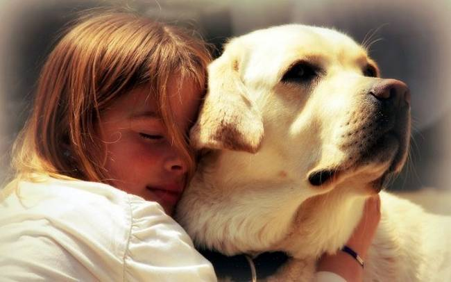 razões-para-mimar-o-seu-cachorro-7