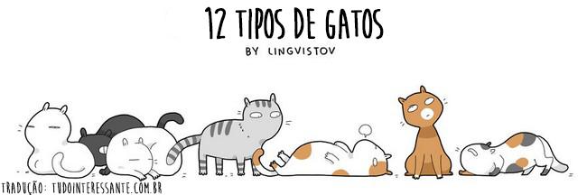 tipos-de-gato-1