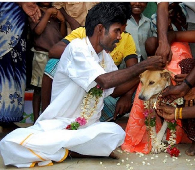 Pessoas-Casando-Animais-1