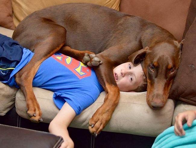 cachorros-espacosos-12
