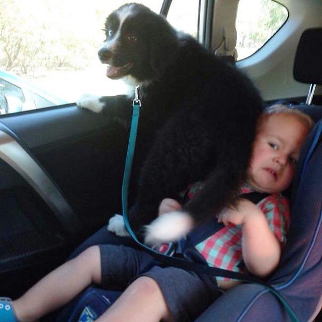 cachorros-espacosos-13