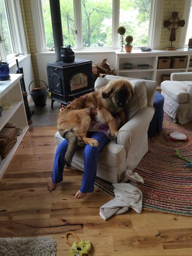 cachorros-espacosos-17