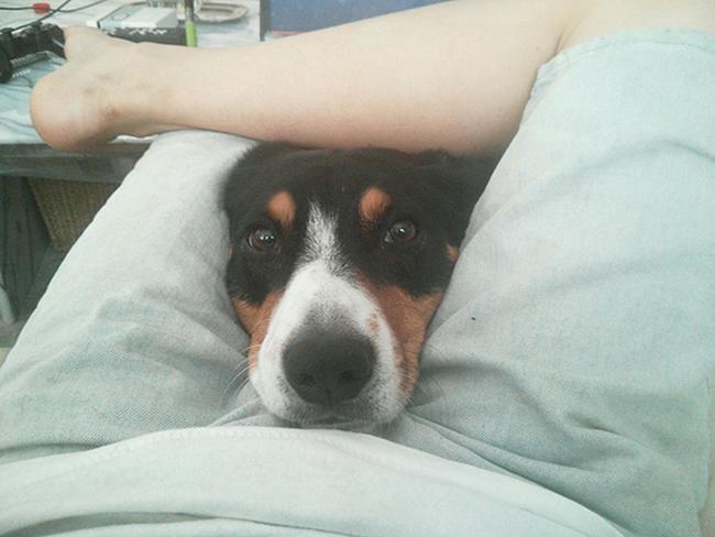 cachorros-espacosos-21