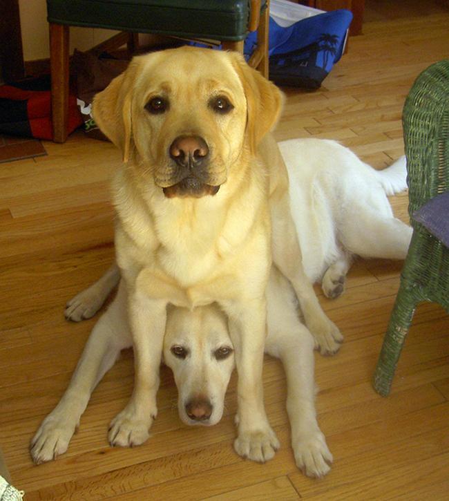 cachorros-espacosos-23