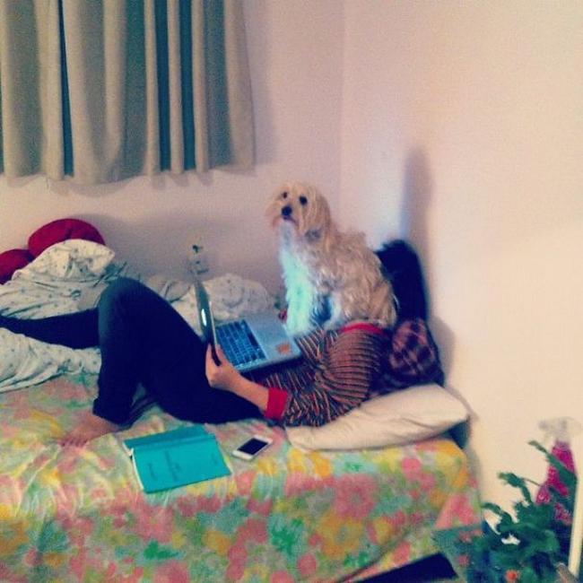 cachorros-espacosos-24
