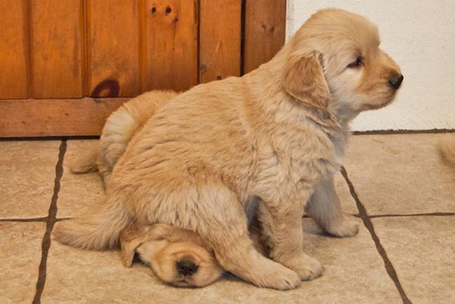 cachorros-espacosos-26