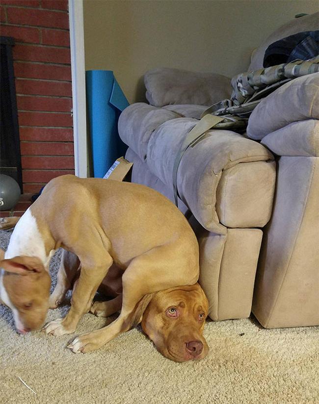cachorros-espacosos-8