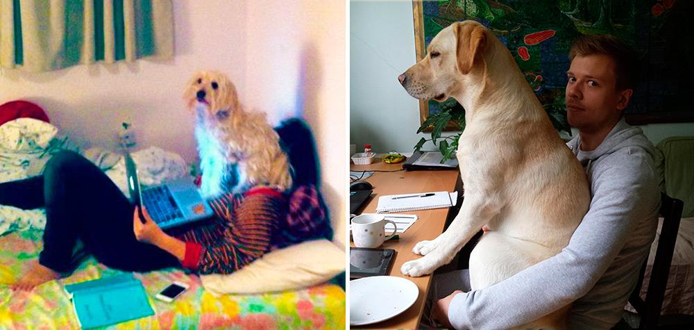 cachorros-espacosos