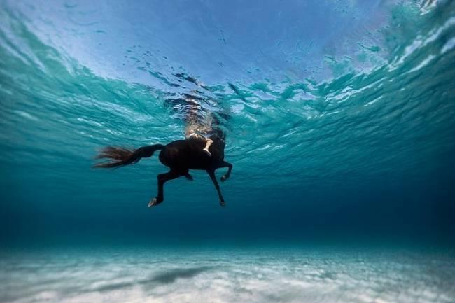 fotos-do-fundo-do-mar-18