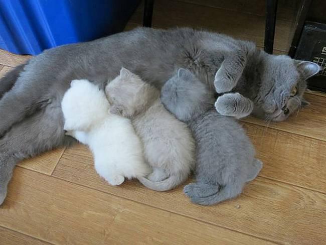 gatas-com-seus-filhotes-1