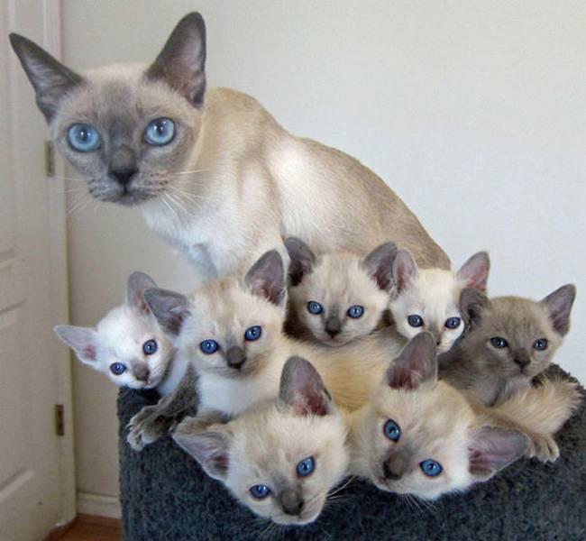 gatas-com-seus-filhotes-10
