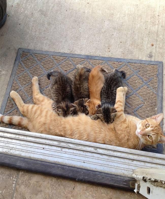 gatas-com-seus-filhotes-12