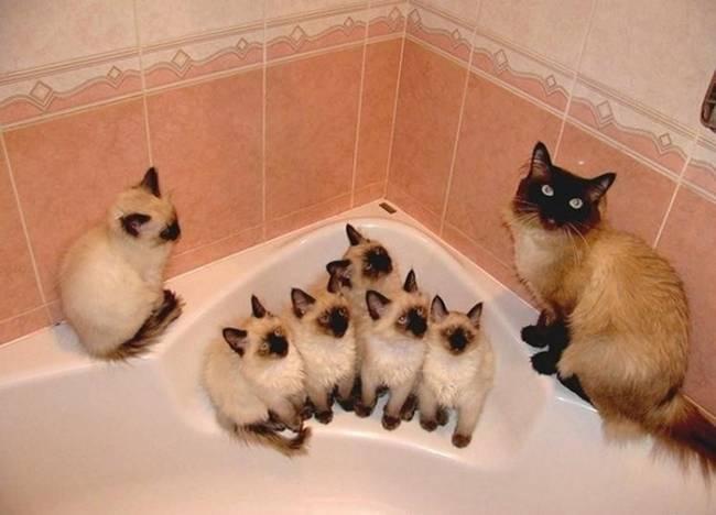 gatas-com-seus-filhotes-13