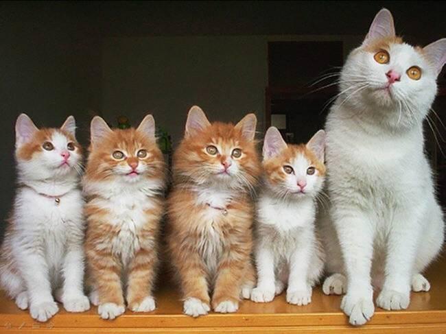 gatas-com-seus-filhotes-14