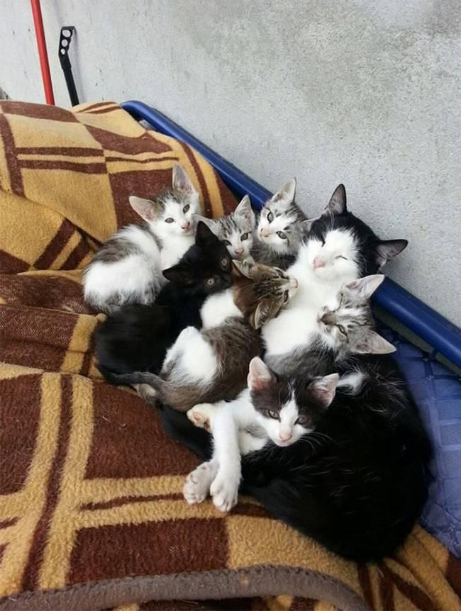 gatas-com-seus-filhotes-15