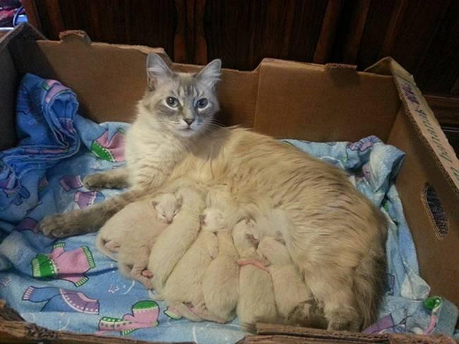 Kitten Cat Having Babies